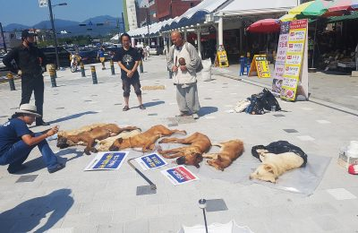 The Three Hottest Days and Dog Meat Soup in Korea