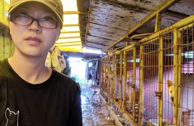 Help Dog Meat Trade Survivors