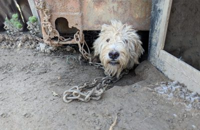 Help Rescue Dogs from the Dangjin Dog Meat Farm