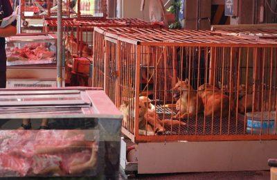 Gupo Dog Meat Market Finally Shut Down