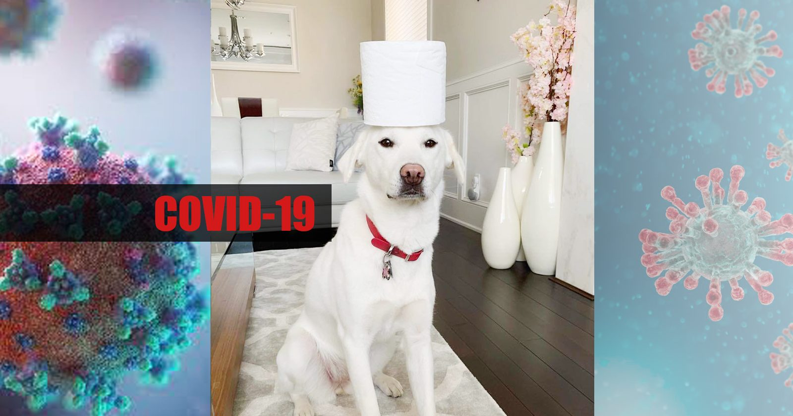 COVID-19: What We're Doing at Free Korean Dogs