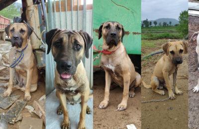 help the dosa family, Boknal survivors