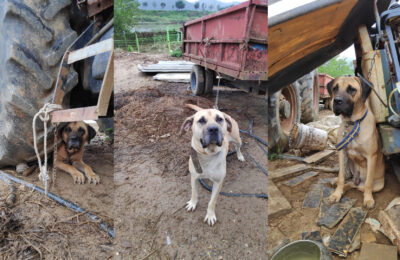An Update On Our Dosa Dog Meat Rescues!