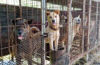 SO, YOU WANT TO SHUT DOWN A DOG MEAT FARM?
