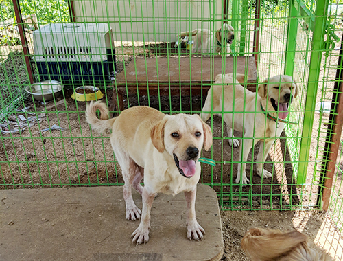 Dangjin dog meat farm rescues at the shelter