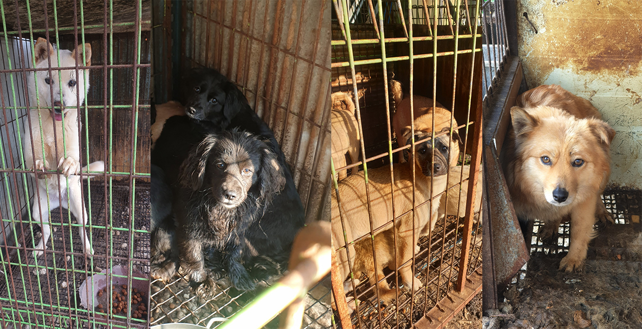 Changing the unimaginable fate of 15 dogs