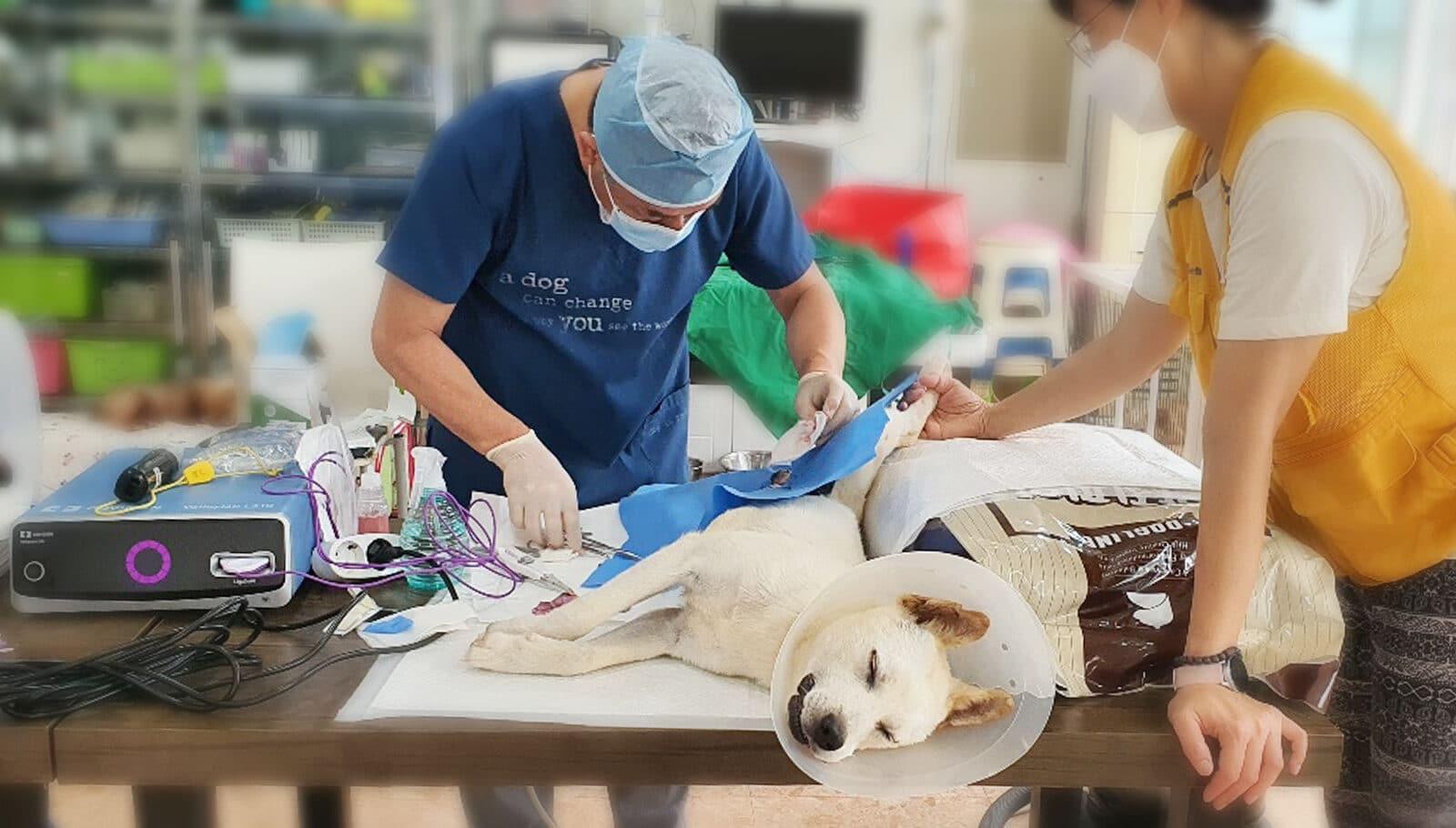 Yongin Dog Meat Rescue Update
